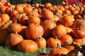 Pumpkin Patch San Antonio, Texas  #Kids #Events