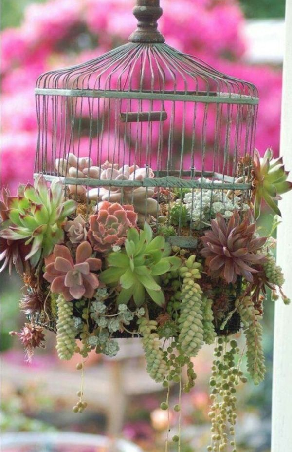 Mini Succulent Garden Garden Ideas Pinterest
