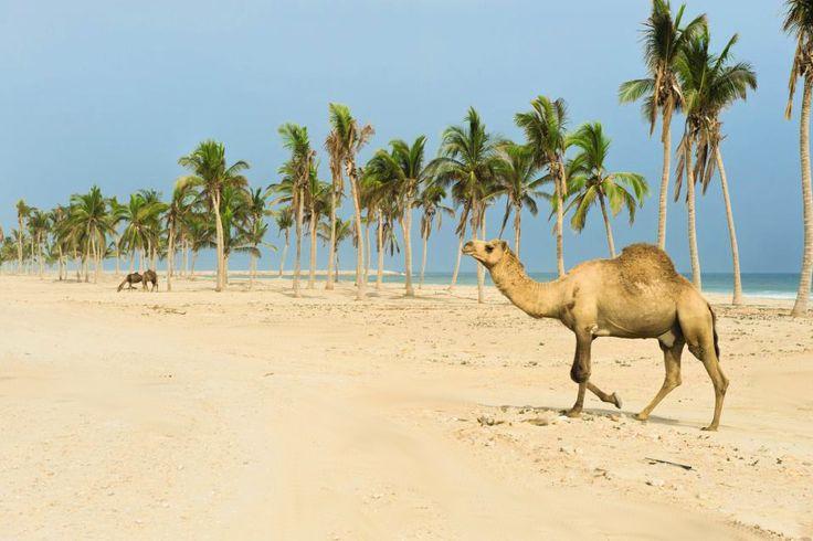 Oman Urlaub in Salalah: Wir verraten die Sehenswürdigkeiten und Vorzüge der Region. Für wen lohnt sich ein Salalah Urlaub? Die schönsten Hotels? Ausflüge?
