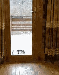 Other Funny Gifs http://gif-tv.tumblr.com/
