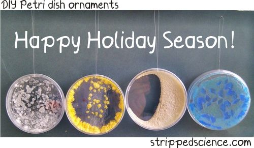 Christmas Petri ornaments: Maybe for a classroom tree