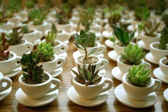petite succulents in a coffee cup, wedding favor idea