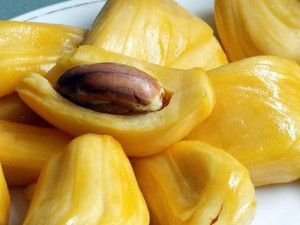 Jackfruit tree :: What is a jackfruit anyway? What makes it so different from some other tropical fruits out there. Jackfruit could be one of the largest fruits on the planet that comes from a jack fruit tree.