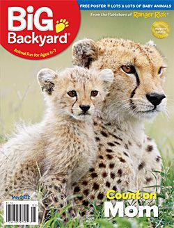 cheetah backyard featuring cheetah cubs animal moms big backyard