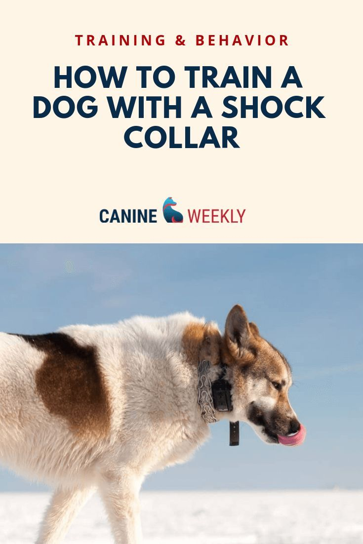 7 Best Shock Collars For Large Dogs Updated 2020 Reviews Shock