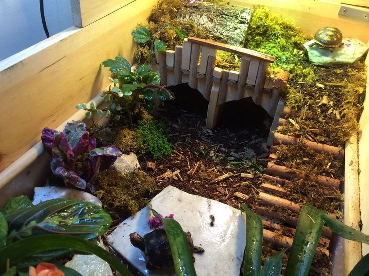 Tortoise enclosure made from plastic bin, handmade wooden frame and LOTS of tort friendly plants. This was built to house hatchlings. ;)