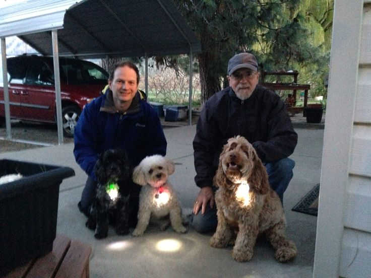 My hubby and father-in-law with Max, Sophie and Rufus!