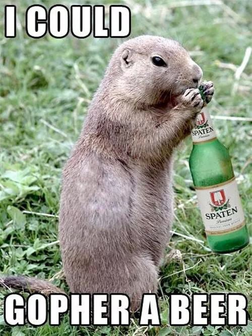 1c9c118a576ad6edc124573de70f5c71 funny meme pictures funny animal pictures 260 best beer me images on pinterest cheese platters, drink wine,Beer O Clock Meme