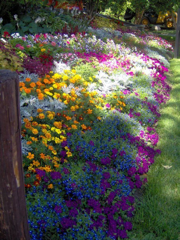 Marigolds, blue lobelia, verbena, petunias, coleus, and dusty miller. You could easily re-create this on a smaller scale.