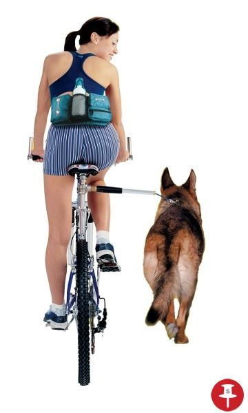 how to take your dog on a bike ride