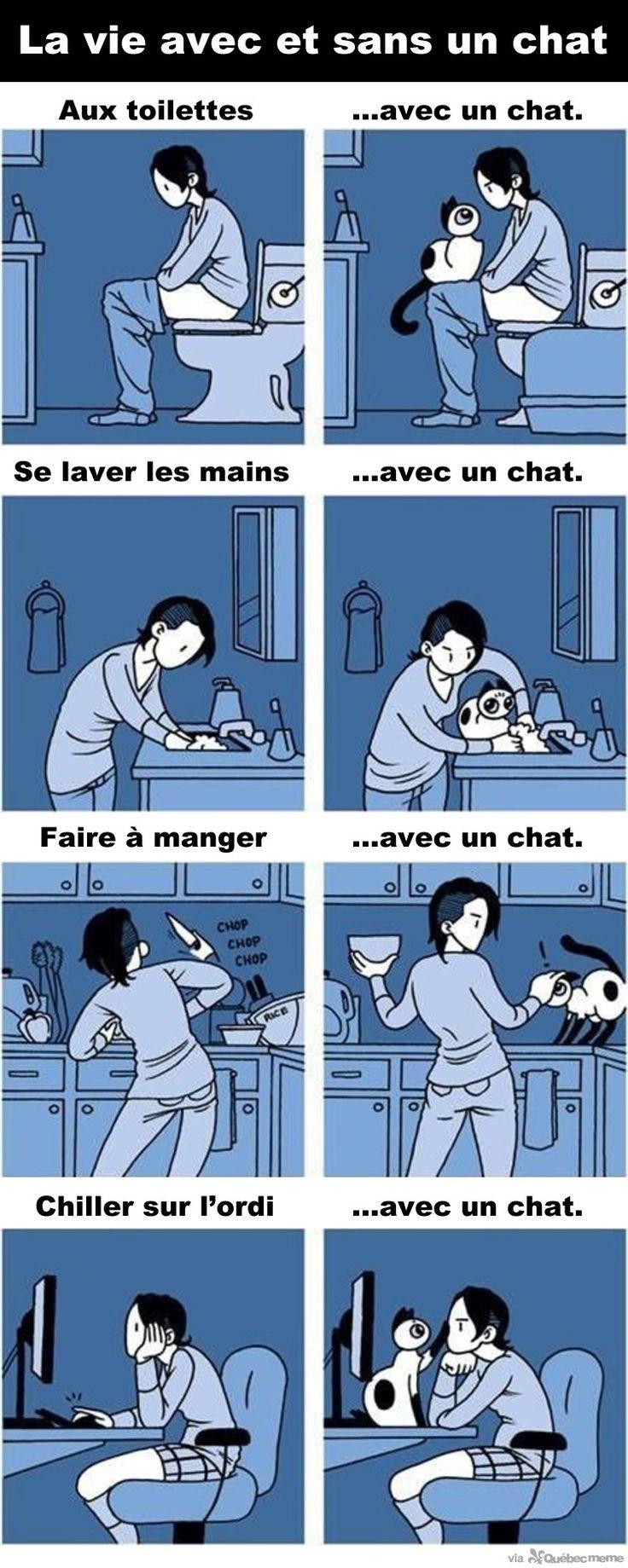 La vie avec un chat – Québec Meme +