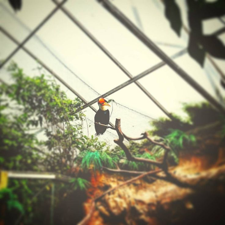 https://flic.kr/p/KaEh9L | #todaypic: Then there was an #Toucan  (#Alphenaanderijn,#2016)  #ZuidHolland,#Netherlands,#Holland,#Europa,#Avifauna,#Zoo,#TiltShift,#Vignette,#normalfilter,#Toekan (BY: #KJVW 2016)
