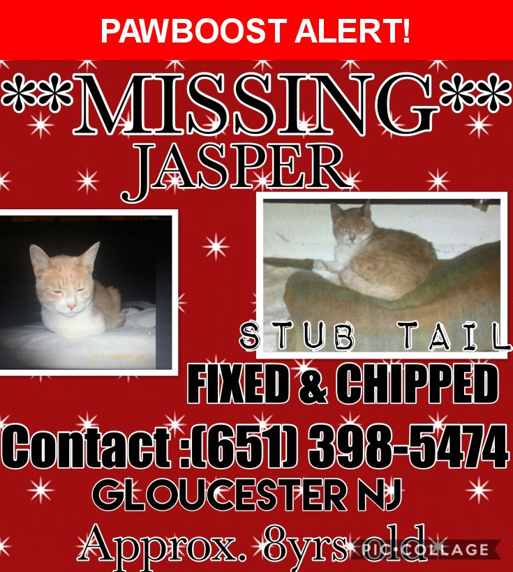 Please spread the word! Jasper was last seen in Gloucester City, NJ 08030.  Description: Jasper is and 8 year old extremely friendly orange and white tabby like cat. He has a stub tail and is fixed. He also has a chip but the phone number on the chip is not active but the name of the owner on the chip is accurate.