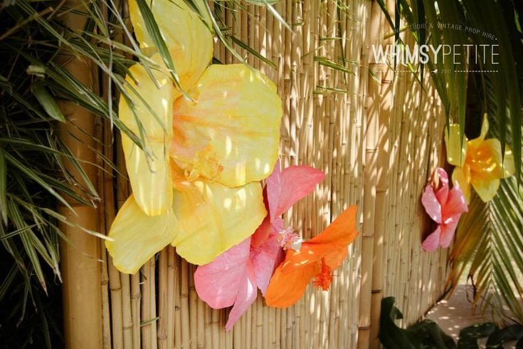 Moana Party Supplies - Lifes Little Celebration