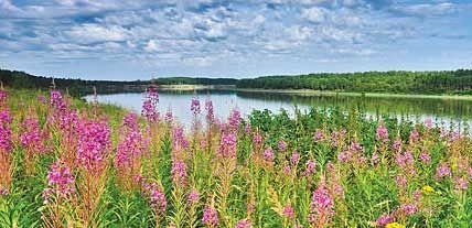 Максимальное использование растительного сырья Мы используем дикорастущие травы, растения и ягоды Сибири, Алтая и Байкала, обладающие высокой биоактивностью.