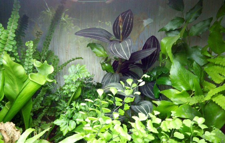 Мои джунгли #ferns #jewelorchid