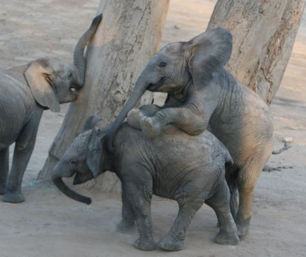 49 Pictures of Baby Elephants