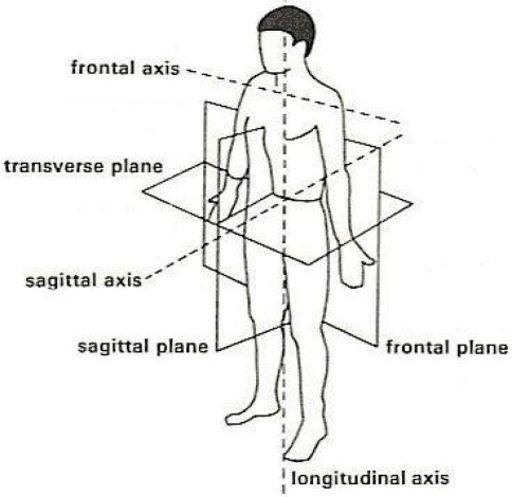 Worksheets. Anatomical Directions Worksheet. Pureluckrestaurant ...