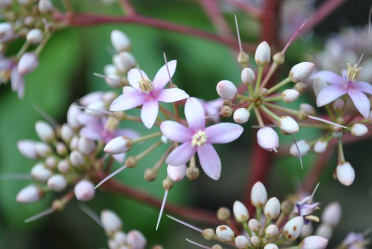 10 best images about native plants  philippines  on pinterest