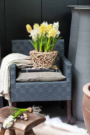 Pairing bulbs with driftwood planters bring earthy elements to modern spaces.