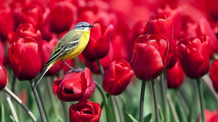 Spring, Spring! Når luften er ren!. Diskussion om LiveInternet - Russisk service Online Diaries