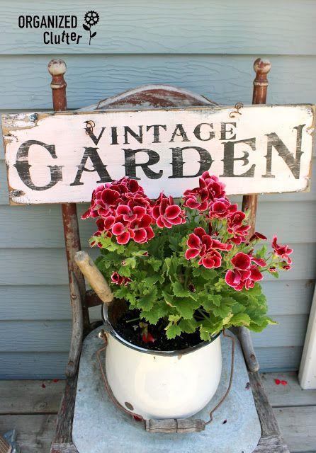 geraniums in a pot - junk gardening