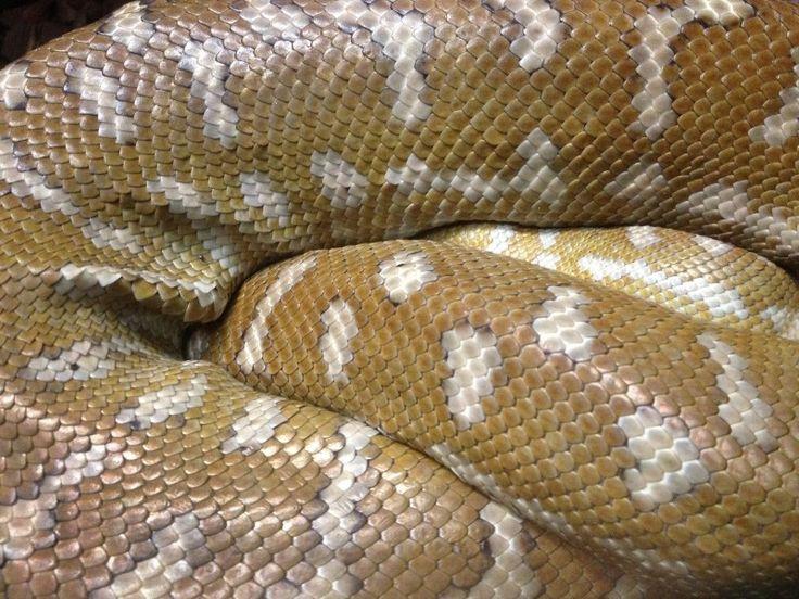 Snake, Snakeskin, Skins, Skin, Reptile, Animals Photo - Visual Hunt