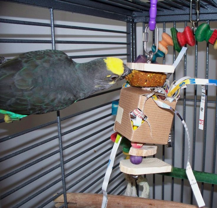 Dedicated to enriching the environment of companion parrot's with ideas for foraging opportunities, creative toys and activities for inside and outside the cage.
