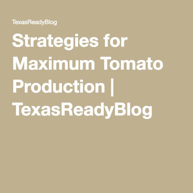 Strategies for Maximum Tomato Production | TexasReadyBlog