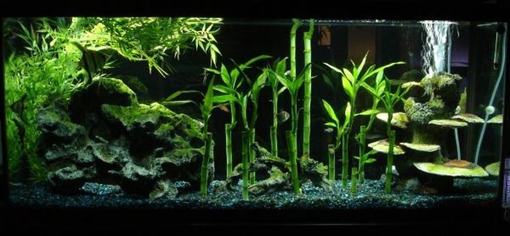 My 55 gallon that serves as a room divider thus why for Fish tank divider 55 gallon