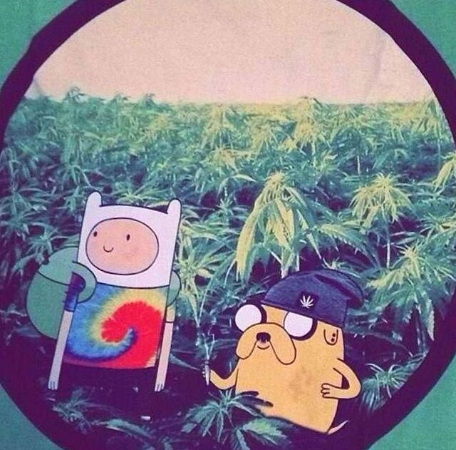 17 Best Images About Adventure Time: High On Pinterest
