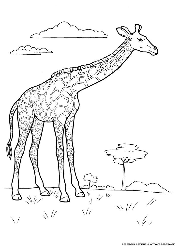 68 best wild animals pages images on pinterest coloring sheets coloring pages and adult. Black Bedroom Furniture Sets. Home Design Ideas