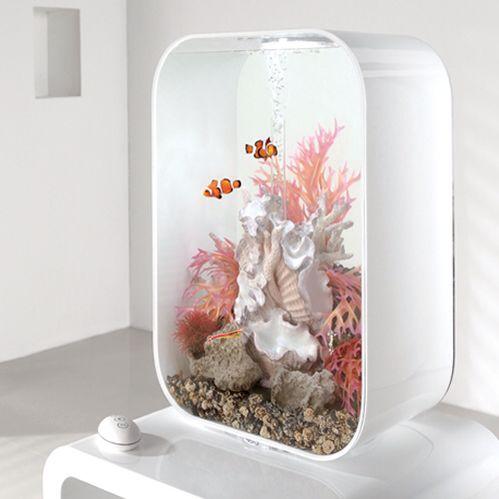 Fancy - Aquarium