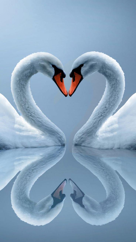 Hd wallpaper love download - Download Free Wallpaper Hd Swan Love Heart