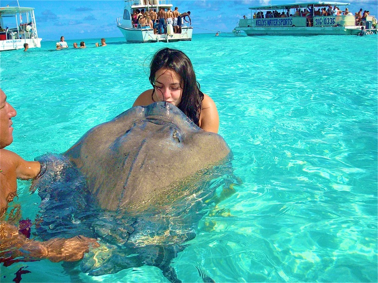 "Stingray City. Grand Cayman Islands most people kissed thes things-I, however, refused to kiss a sting ray. It was just looking at me. It said, ""where's my kiss?"""