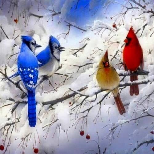 beautiful bird winter ndash - photo #8