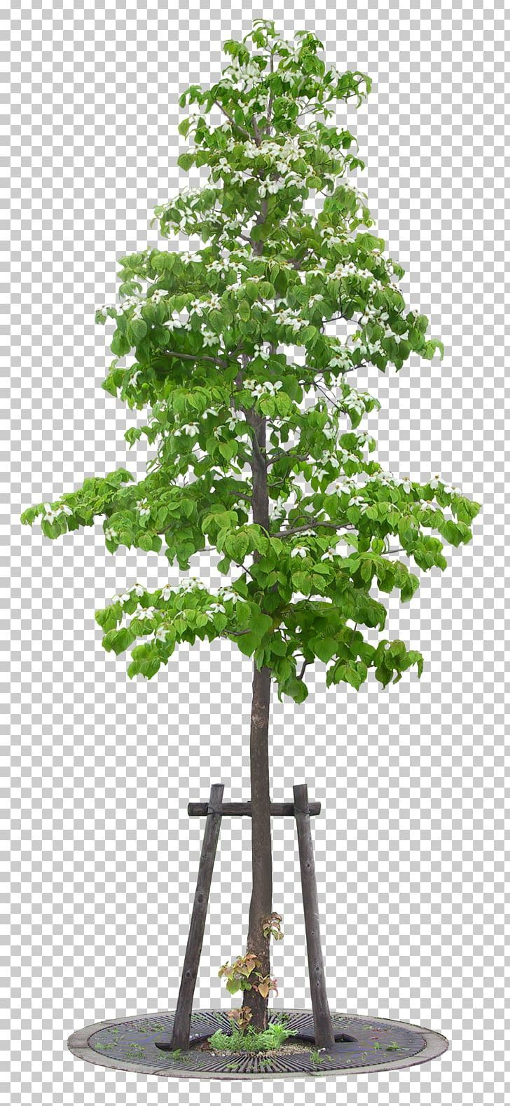 Tree Painting Png 3d Computer Graphics Big Bonsai Branch Christmas Tree Tree Painting 3d Computer Graphics Computer Graphics