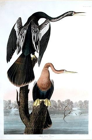 by John James Audubon scientific study as well as romantic engravings and watercolors