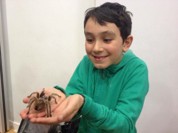 In 2013 we had an animal ranger come down with snakes and spiders.