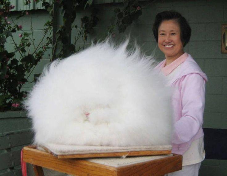 Ζώα με αστεία μαλλιά Διαβάστε το άρθρο στην ΕΛΕΥΘΕΡΙΑ http://www.eleftheriaonline.gr/stiles-sxolia/funny-strange/item/47780-zoa-me-asteia-mallia