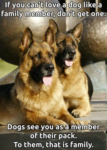 Dogs ARE family. Not possessions!