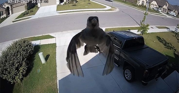 Al Brooks found security camera footage of a levitating bird that was caused by a stroboscopic effect due to the frame rate syncing up with the bird wings.