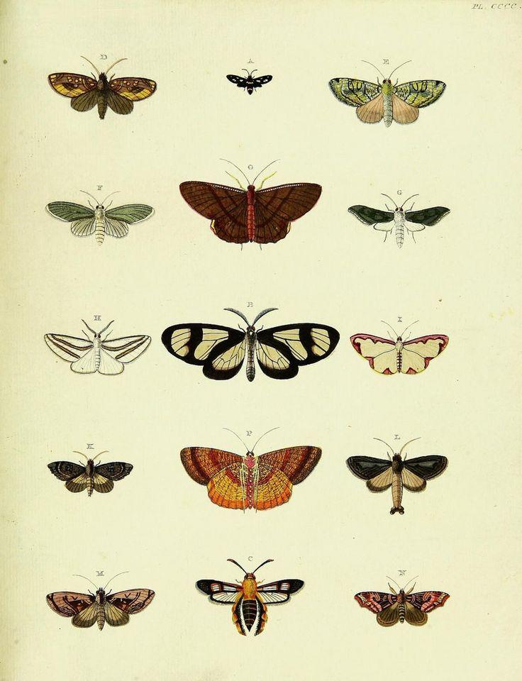 De uitlandsche kapellen voorkomende in de drie waereld-deelen, Asia, Africa en America,. Amsteldam,Chez S. J. Baalde;1779-1782.. biodiversitylibrary.org/page/42111269