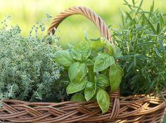 12 Plantas para repeler Moscas