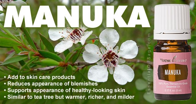 Help Me Oil! Essential Encouragement : Manuka Essential Oil
