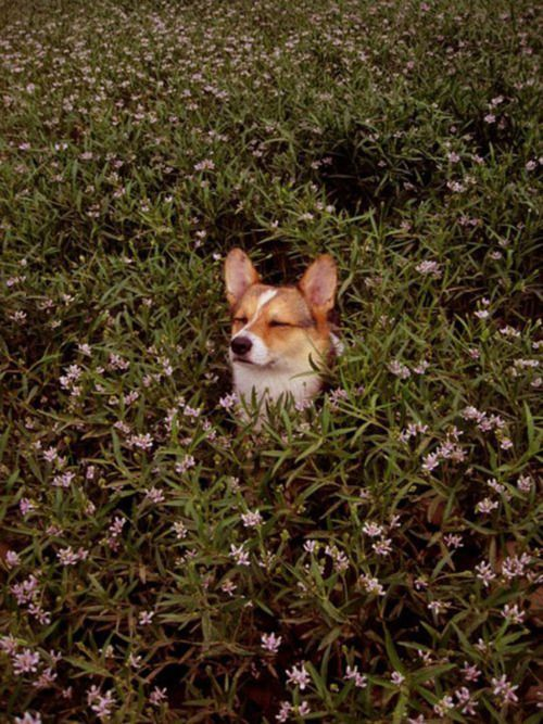 My dog Sweetie used to nap in our flower beds. I sure miss that dog!