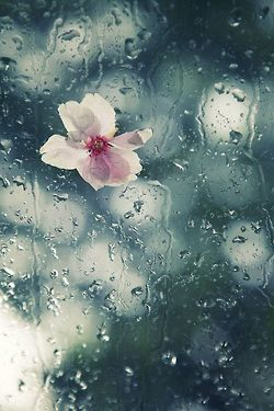 "March   Verdant Awakenings . ""It is rain that grows flowers, not thunder."" ~ Jalaluddin Rumi"