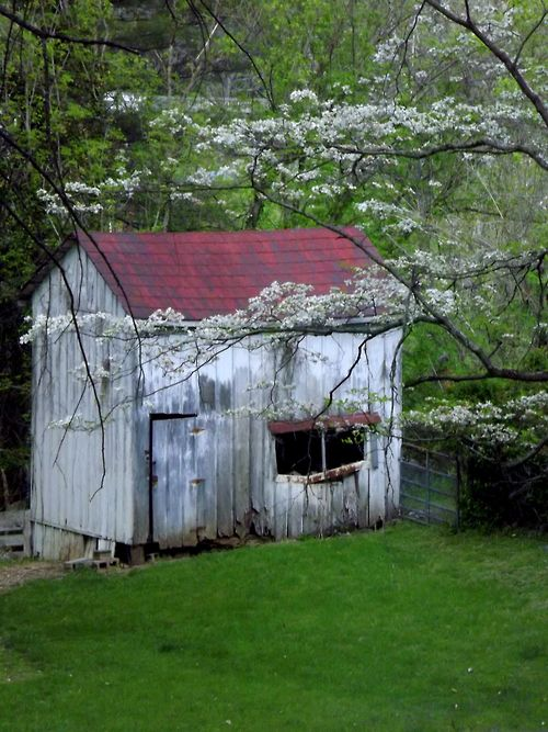 a garden shed in lexington virginia with a dogwood in the foreground spotted during
