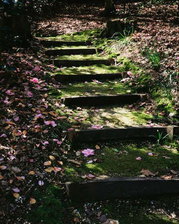 These steps leading up to the house, a shed, anywhere really on my property would be quite lovely.
