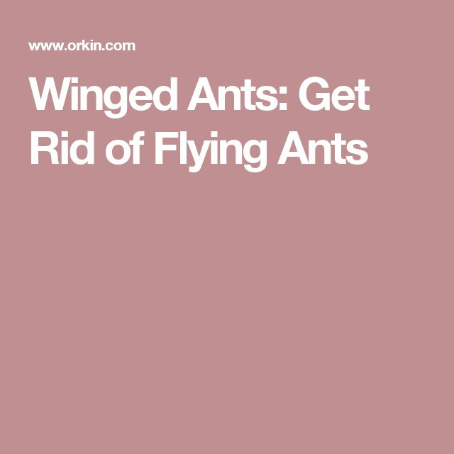 Winged Ants: Get Rid of Flying Ants